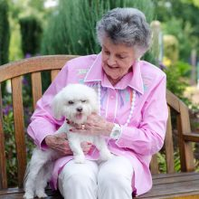 photo gallery - dog friendly seniors