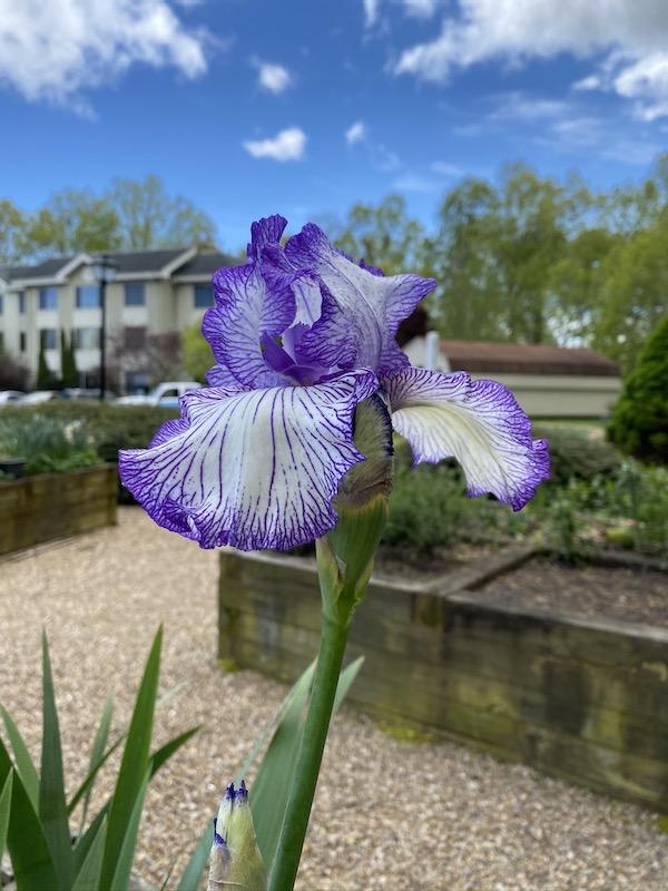 A closeup photo of a flower.